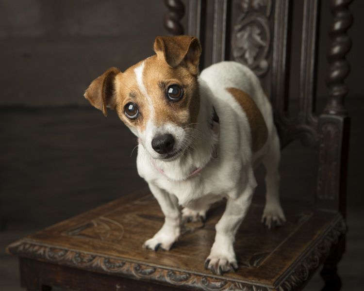 Pet portrait day in aid of Limerick Animal Welfare