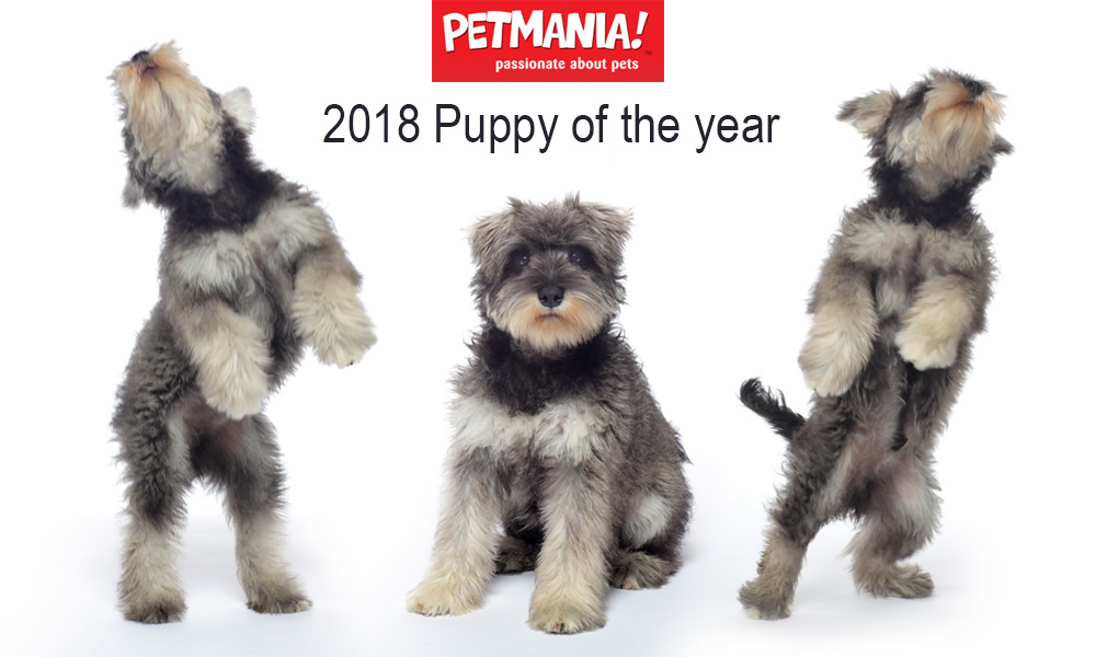 Delighted to photograph Petmania's Puppy of the Year...